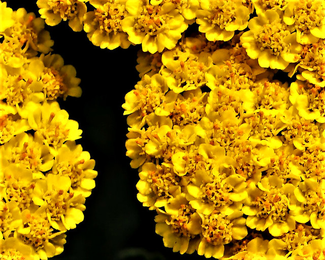 Yellow Clusters