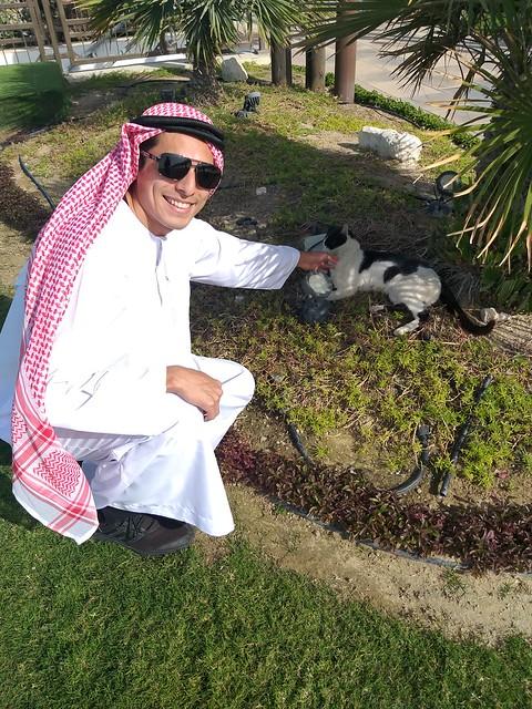 Me encontré un gato en los parques de Doha