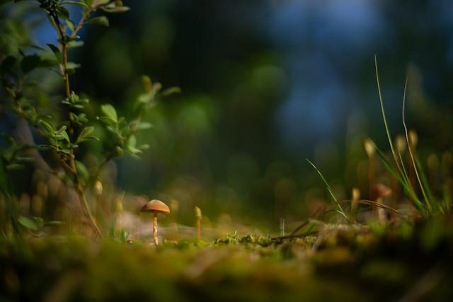 Unrecognized Mushroom 4