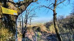 Der Hirtenfels am Donnersberg mit Blick in die Rheinebene Wanderung Rheinland-Pfalz Deutschland