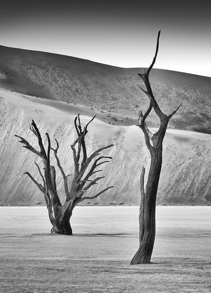 Dead Vlei Camel Thorn Trees
