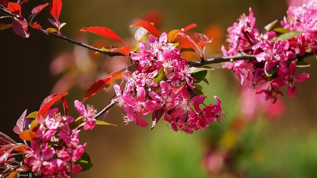9815 -Spring