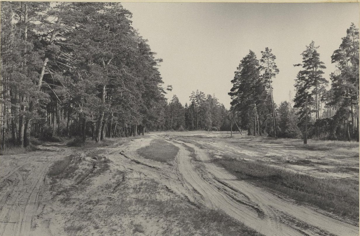 Сосновый бор на песках. (К западу от Переславля-Залесского)