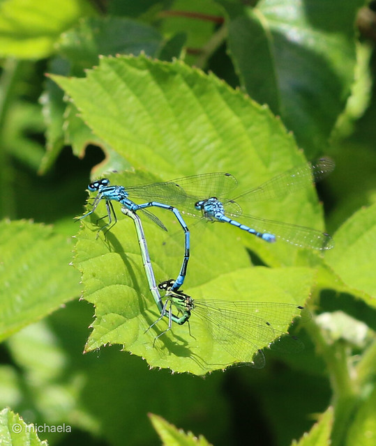 damsels today