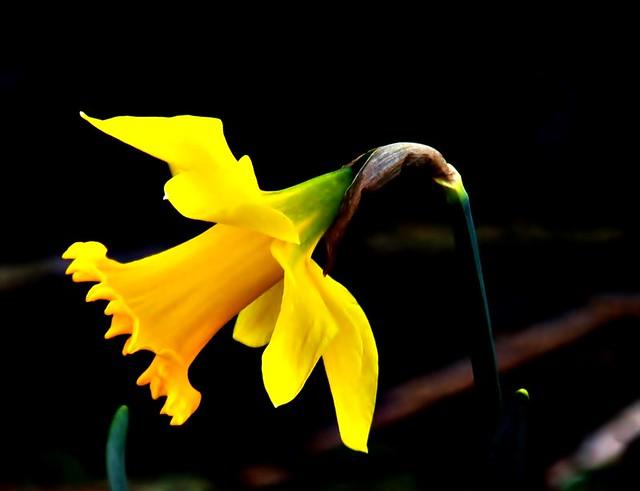 3 (2)..austria flower power