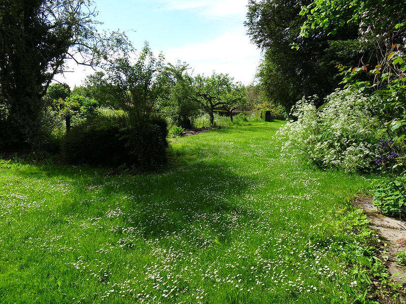 Side lawn, filled with daisies