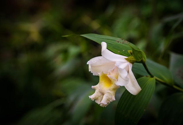 Orchid, Kew Gardens