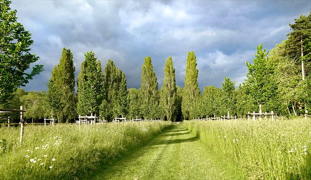 La plaine de Chatenay au soleil couchant (Domaine de Sceaux, France)