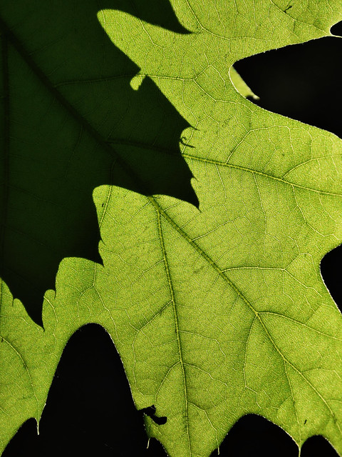 leaf abstraction