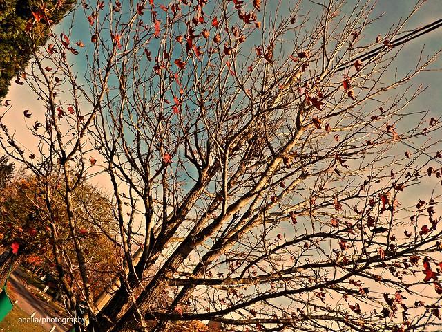 Irremediablemente otoño 2