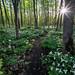 Magical Hiking Trail