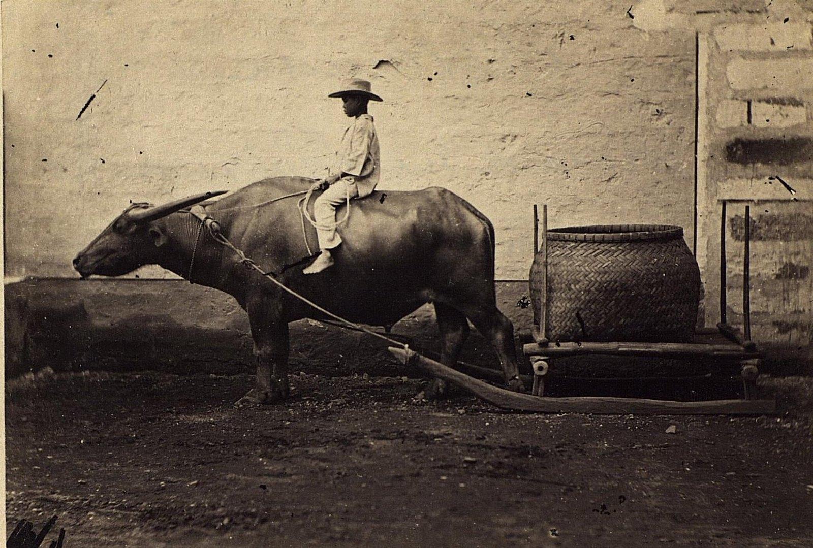 Способ перевозки тяжестей. Филиппины, город Манила. 1872.