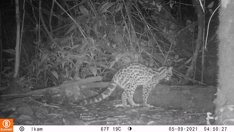 Monitoreo de fauna silvestre en Reserva Arena Blanca