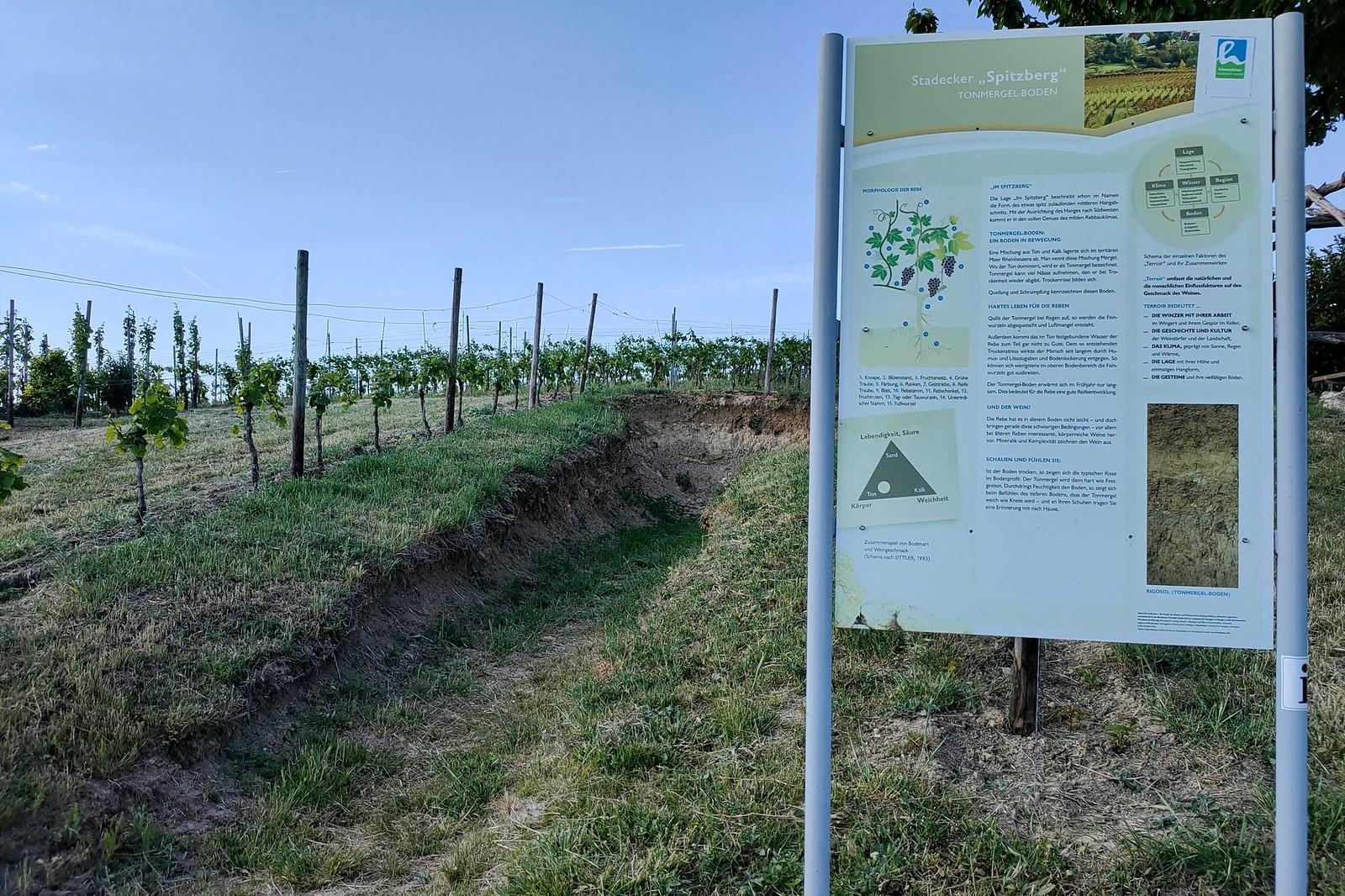 Bodenprofil Tonmergel (Hiwweltour Stadecker Warte)