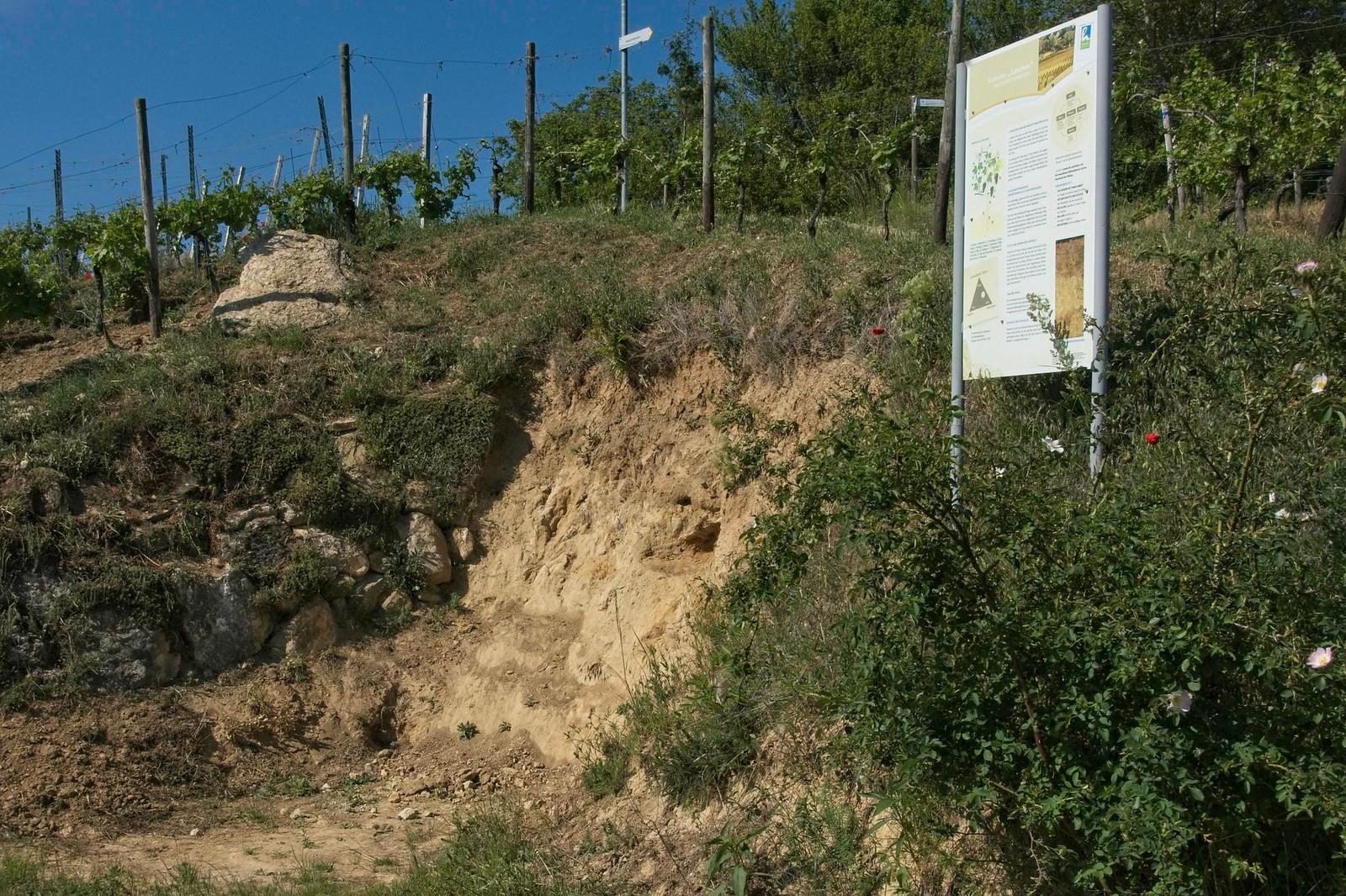 Bodenprofil Kalksandstein (Hiwweltour Stadecker Warte)