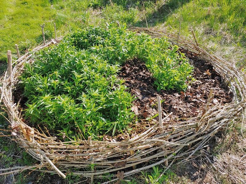 Updating the Wildflower Stump Garden with Wattle Fencing