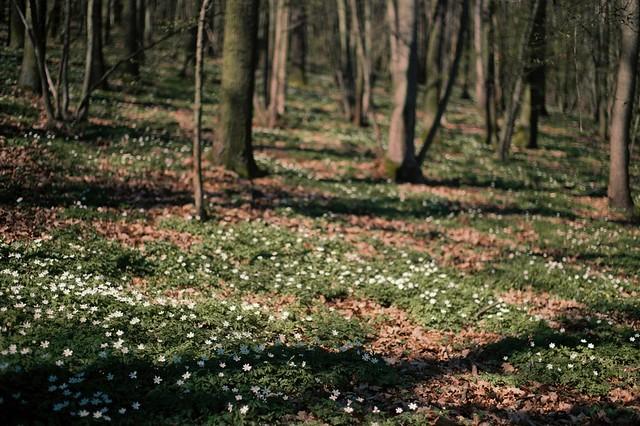 Little whites in Spring