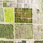 Debre Zeit HSU field plots