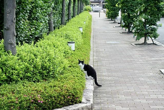 Today's Cat@2021−06−07