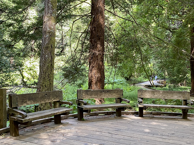 Muir Woods - to sit among the giants