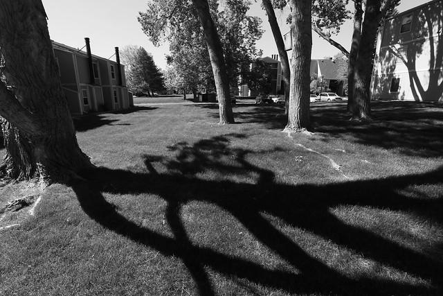 Condos and Shadows