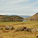 "<p><a href=""https://www.flickr.com/people/kodak260/"">Kodak Photographer NL</a> posted a photo:</p>  <p><a href=""https://www.flickr.com/photos/kodak260/51231308646/"" title=""190907 - Oregon - Mount Shasta Roadtrip - 03 Lake Shastina 1008""><img src=""https://live.staticflickr.com/65535/51231308646_a4bf74182e_m.jpg"" width=""240"" height=""161"" alt=""190907 - Oregon - Mount Shasta Roadtrip - 03 Lake Shastina 1008"" /></a></p>"