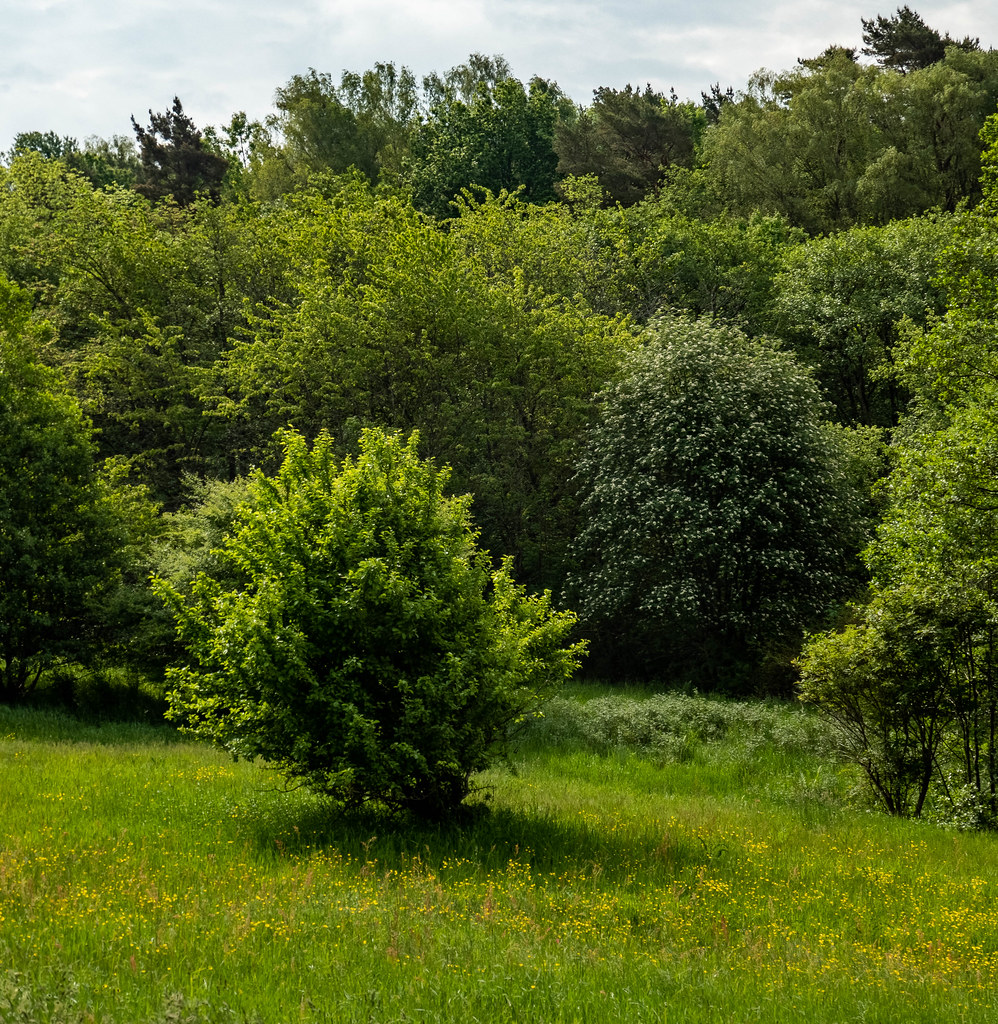 Summer greenery on the meadow