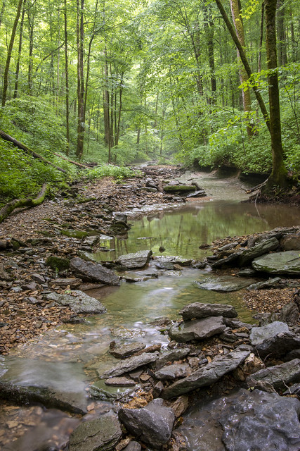 Unnamed tributary to Spring Creek, Wash Morgan Hollow, Jackson County, Tennessee