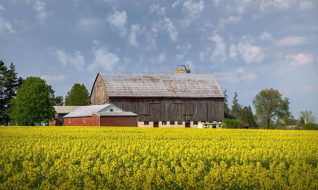 Farm Yellow