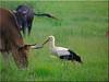 friedliche Koexistenz - peaceful coexistence