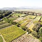 Debre Zeit field