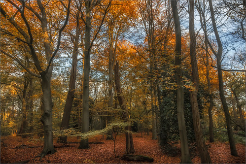 belgium sintkatelijnewaver autumn fall nature landscape tree