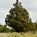 "<p><a href=""https://www.flickr.com/people/kodak260/"">Kodak Photographer NL</a> posted a photo:</p>  <p><a href=""https://www.flickr.com/photos/kodak260/51232074414/"" title=""190907 - Oregon - Mount Shasta Roadtrip - 03 Lake Shastina 1013""><img src=""https://live.staticflickr.com/65535/51232074414_5d66188265_m.jpg"" width=""160"" height=""240"" alt=""190907 - Oregon - Mount Shasta Roadtrip - 03 Lake Shastina 1013"" /></a></p>"