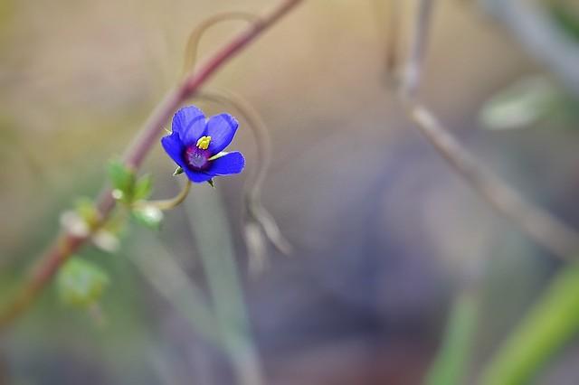 Epoca de flores