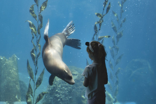 Meeting the Seal