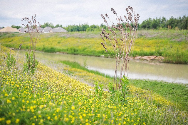 river bank flowers