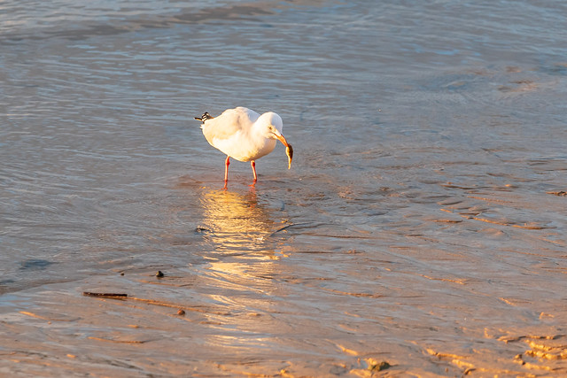 Seagull at the seaside
