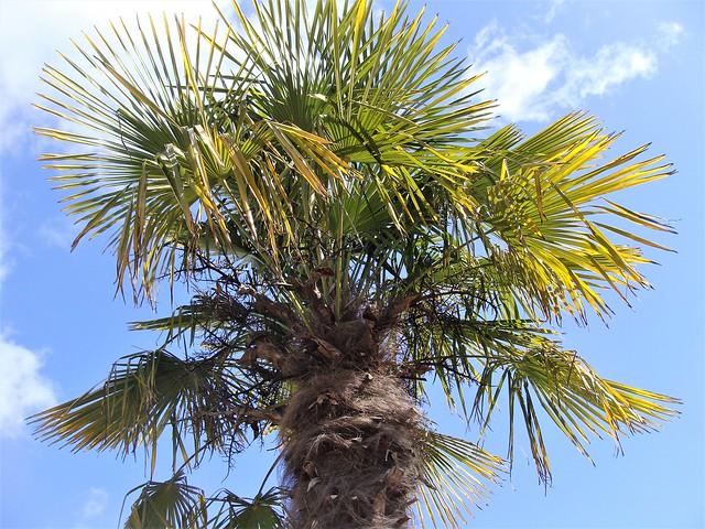 Tropical Victoria