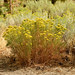 "<p><a href=""https://www.flickr.com/people/kodak260/"">Kodak Photographer NL</a> posted a photo:</p>  <p><a href=""https://www.flickr.com/photos/kodak260/51232370680/"" title=""190907 - Oregon - Mount Shasta Roadtrip - 03 Lake Shastina 1012""><img src=""https://live.staticflickr.com/65535/51232370680_3b349a24e8_m.jpg"" width=""240"" height=""160"" alt=""190907 - Oregon - Mount Shasta Roadtrip - 03 Lake Shastina 1012"" /></a></p>"
