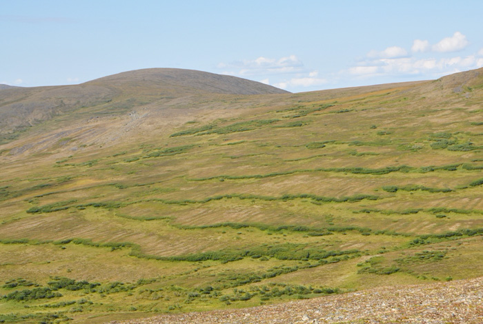 A particular type of soil movement in the arctic called solifluction shares features of dripping paint and melting cake icing. Now scientists know why and how this happens