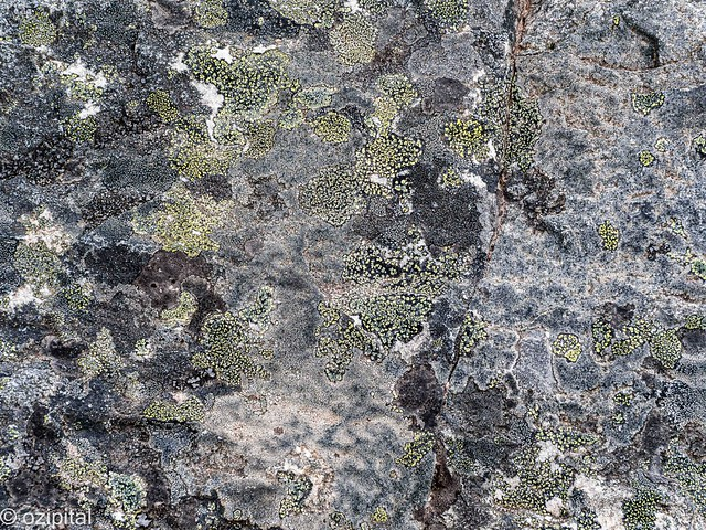 What I Lichen About The World