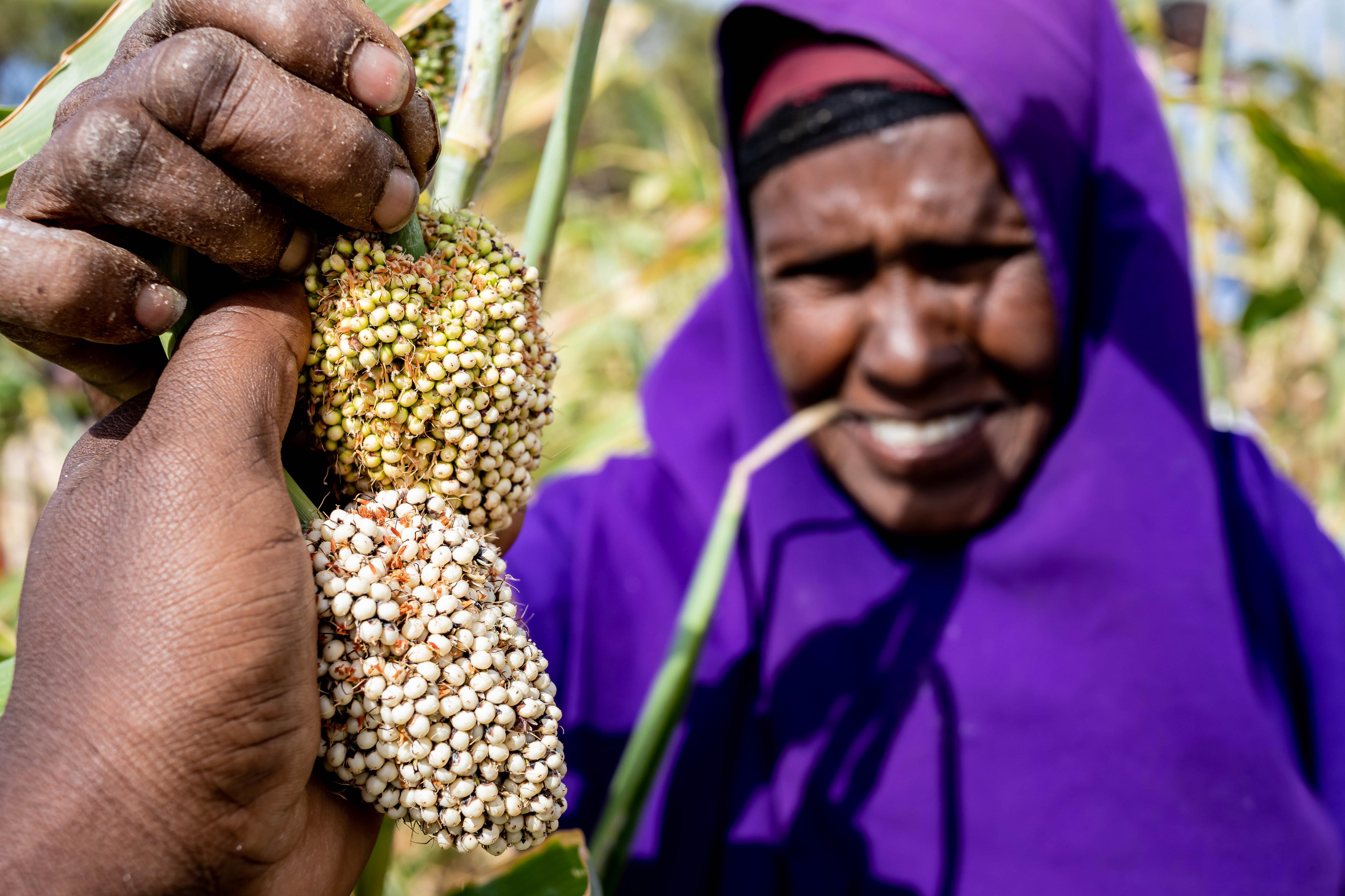 Somalia | Fall armyworm and Farmer Field School activities