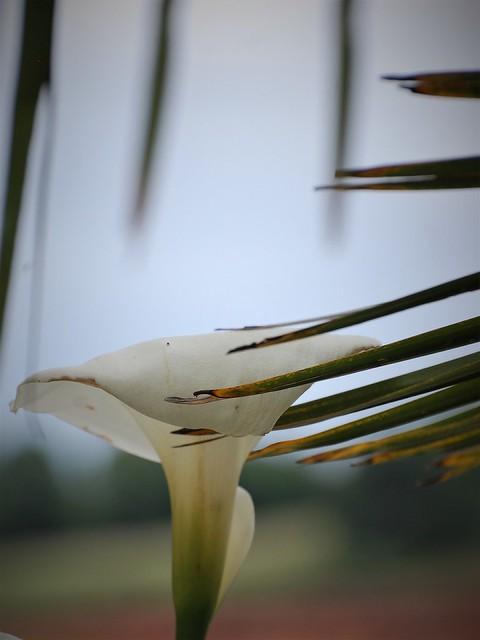 Soutenu par une main de palmier