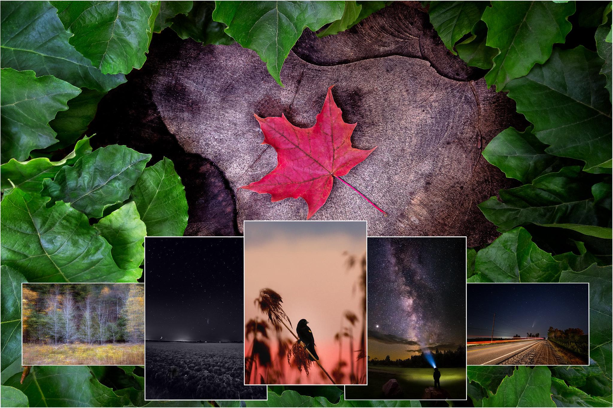 Collage_Fav_2020_V1
