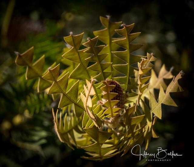 Geometric Plant-Explored Jun 8, 2012 #267