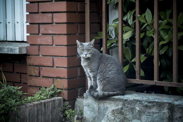 A Brave Cat