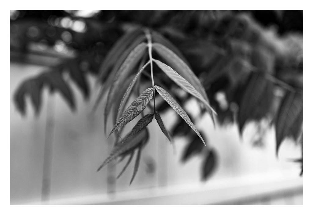 Leica Q2M Test 11