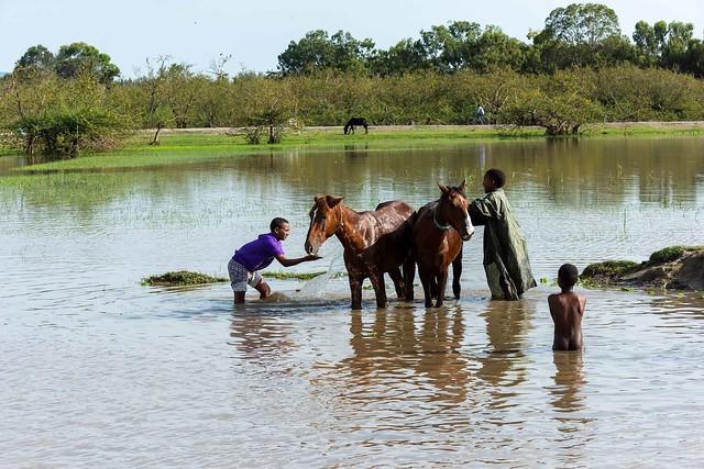 Horses at Lake Ziway