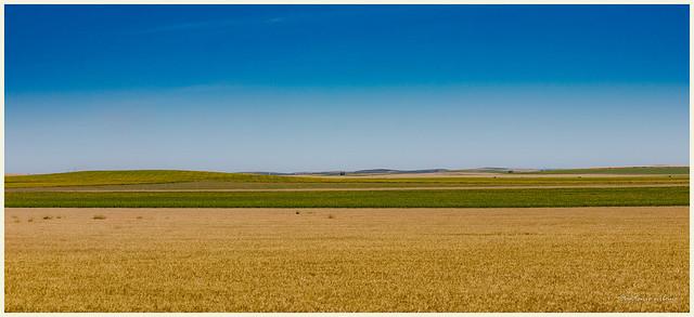 Cultivos de verano en la campiña Sevillana // Summer crops in the Sevillian countryside