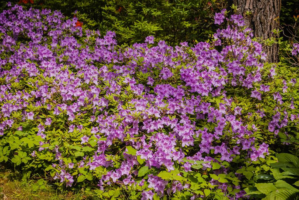 цветение 11:40:17 DSC_2671